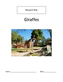 Research This! Giraffes
