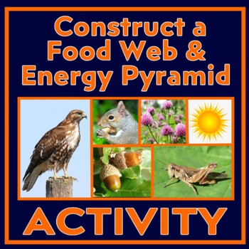 Research Trophic Levels to Construct a Forest Ecosystem Food Pyramid