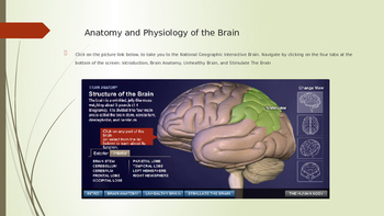 Resource PowerPoint for Psychology or Anatomy: Neurons, Nervous System, & Brain