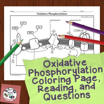 Cell Respiration Activity: Oxidative Phosphorylation Coloring Page