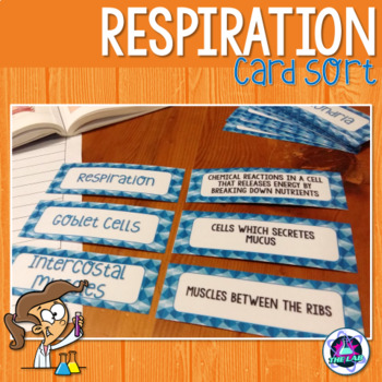 Respiration Card Sort