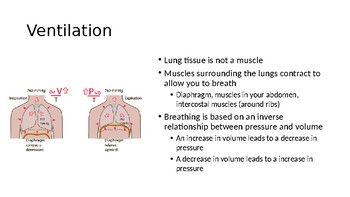 Respiration IB Bio PPT