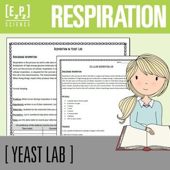 Cellular Respiration Lab