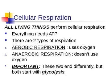 Respiration Notes