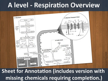 Respiration Overview Sheet (A level resource)