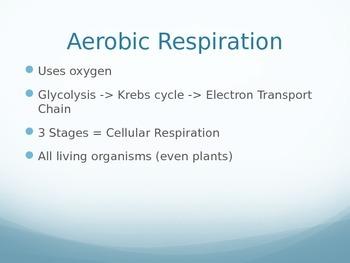 Respiration Part 1 PowerPoint