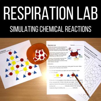Respiration Simulation Lab