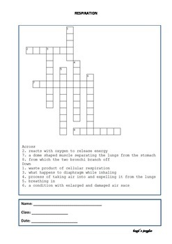 Respiration crossword puzzle for grade 8 students