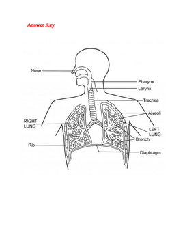 Respiratory Activity