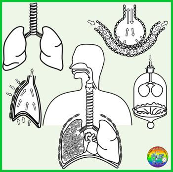 Respiratory Clipart