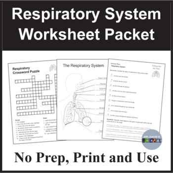 Respiratory System Worksheets Teaching Resources Teachers Pay Teachers