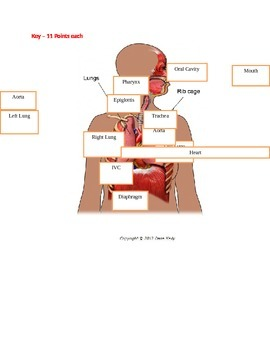 Respiratory Drag and Drop with KEY
