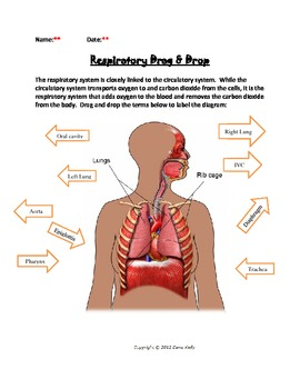 Respiratory System Bundled Unit in WORD