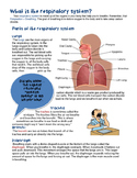 Respiratory System Reading and Writing Activities