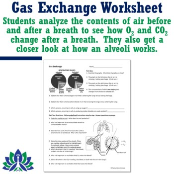 Human Body Systems Respiratory Alveoli Gas Exchange Worksheet NGSS MS-LS1-3