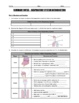 Respiratory System - Anatomy, Inhalation, Exhalation, Gas