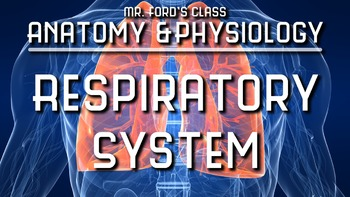 Respiratory System: Anatomy and Physiology