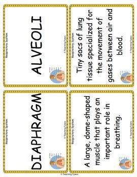 The Respiratory System Vocabulary Cards