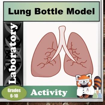 Respiratory System Bottle Model Activity