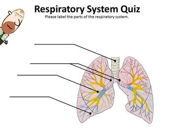 Respiratory System BrainBlast