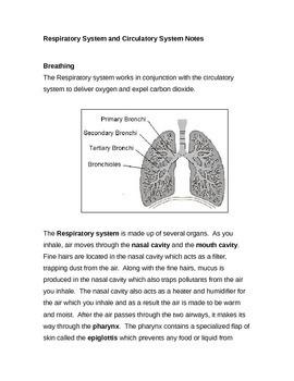 Respiratory System & Breathing