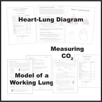 Respiratory System Bundle of Activities