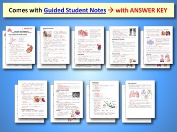 Respiratory System Bundle - 5 Complete Interactive PowerPoint Lessons {EDITABLE}