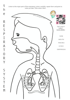 Respiratory System Colouring Page (including a FREE Audio recording)