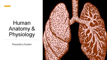 Respiratory System Complete Lesson (PowerPoints and Assessments)