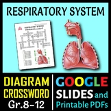 Respiratory System Crossword with Diagram {Editable}