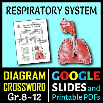 Respiratory system activities teaching resources teachers pay teachers respiratory system crossword with diagram editable ccuart Choice Image