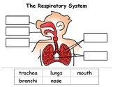 Respiratory System Cut & Paste