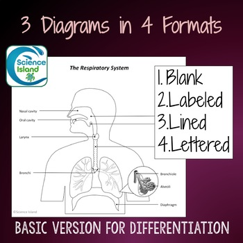 Respiratory system diagrams quizzes by science island tpt respiratory system diagrams quizzes ccuart Gallery