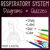 Respiratory System Diagrams & Quizzes