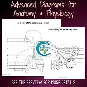 Respiratory System Diagrams Quizzes By Science Island Tpt