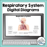 Respiratory System Diagrams for Distance Learning