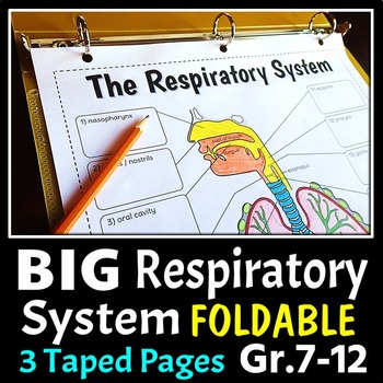 Respiratory System Foldable - Big Foldable for Interactive Notebooks or Binders
