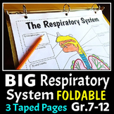 Respiratory System Foldable - Big Foldable for Interactive
