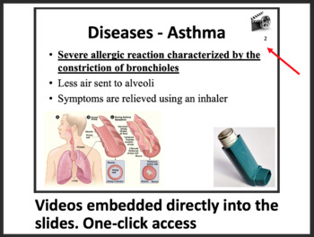 Respiratory System - Biology PowerPoint Lesson & Student Notes Package