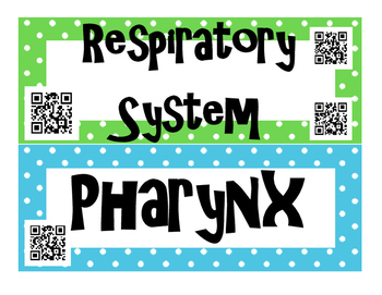 Respiratory System INTERACTIVE Word Wall for High School Anatomy