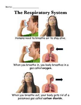 Respiratory System - Journal