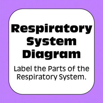 Respiratory system diagram personal use only anatomy and physiology ccuart Choice Image