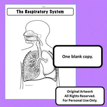 Respiratory System Diagram Personal Use Only Anatomy and Physiology