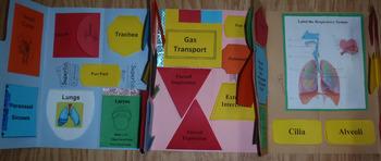 Respiratory System Lapbook/Interactive Notebook