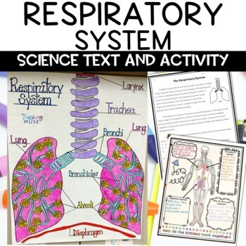 Respiratory System Nonfiction Article and Doodle Sketch No