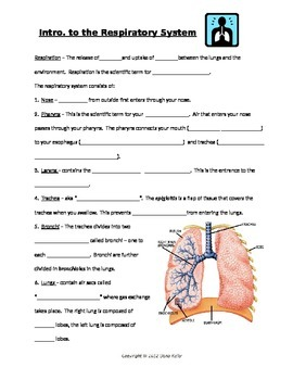 Respiratory System Open Notes with KEY