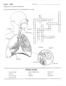 Respiratory System Packet/Work