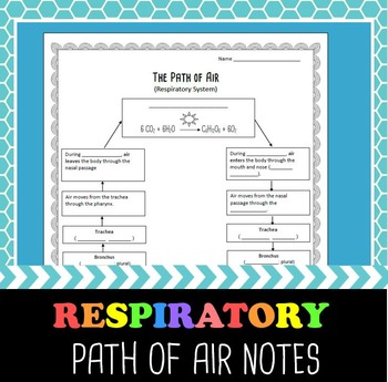 Respiratory System- Path of Air