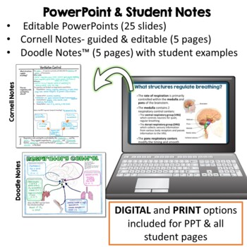 Respiratory System- PowerPoint, Notes, Diagrams, & Lab Activity