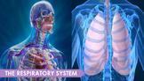 Respiratory System PowerPoint Presentation